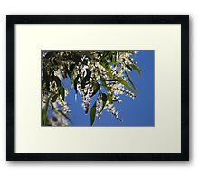 Gum Nut Blossoms  Framed Print