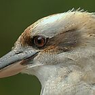Kookaburra at Sherbrooke IV by Tom Newman