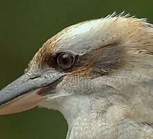 Kookaburra at Sherbrooke IV by Tom Newman