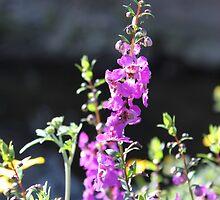 Simple Purple Flower by Elspeth  McClanahan