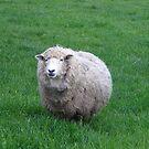 What're Ewe lookin' at? by Krystal Iaeger