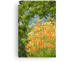 Country Lily Canvas Print