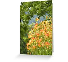 Country Lily Greeting Card