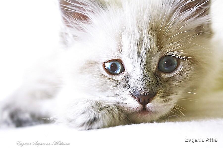 My little Vivi by Evgenia Attia