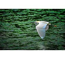Flying Over Green Water Photographic Print