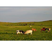 Longhorn Cattle, Oklahoma Photographic Print