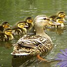 Mommy and Baby Ducks by Zoe Marlowe