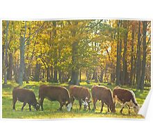 Synchronized Grazing_1 Poster