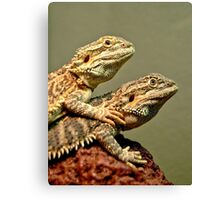 Basking Dragons  Canvas Print