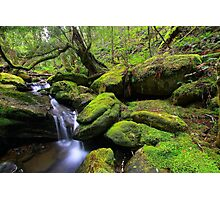 """Mossy Creek"" Photographic Print"