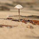 Baked Mushroom by Amrita Neelakantan