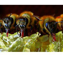 Api, che immettono il miele nelle cellette - missano  ( zocca modena italy).... 050 Photographic Print