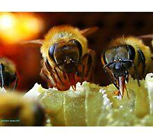 Api, che immettono il miele nelle cellette - missano  ( zocca modena italy).....054 Photographic Print