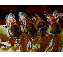 Api, che immettono il miele nelle cellette - missano  ( zocca modena italy)...... 047 Photographic Print