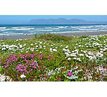 Dune Flowers Photographic Print