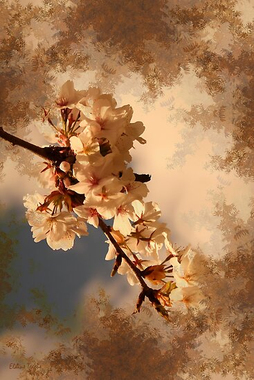 Spring Cherry Blossom by Elaine Teague