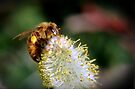 Busy Bee by Jan  Tribe