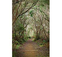 Pathway  Photographic Print