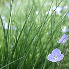 Forget-Me-Not Meadow by emele