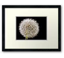 Shhmoking Dandelion Framed Print