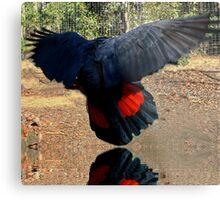 Red Tail Cockatoo Metal Print