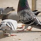 Posing Pigeon. by Mark  Humphreys