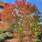 Autumn Colors by jaskel