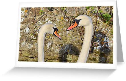 ' Swan Vista ' by relayer51