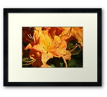 Orange Flower Close Up Framed Print