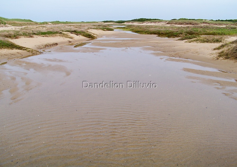 Cape Cod National Seashore by Dandelion Dilluvio
