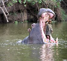 little girls pet hippo by gruntpig