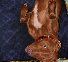 Young Red Nose Pit Bull Laying on his Back, Ready to be Tickled  by ibadishi
