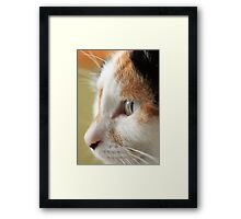 Nishi Framed Print