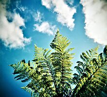 tree fern in paradise by redcow