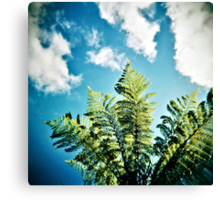 tree fern in paradise Canvas Print