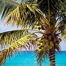 Coconut Palm by Sam Scholes