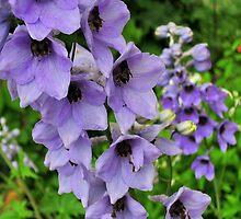 Summer flowers by Bluesrose