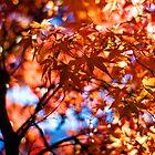 Autumn Colors by Sam Scholes