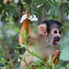 Flower Monkey by ApeArt