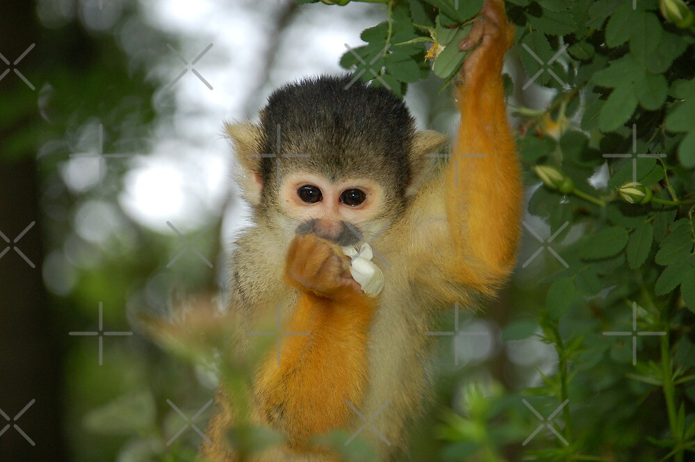 Flower Monkey Too by ApeArt