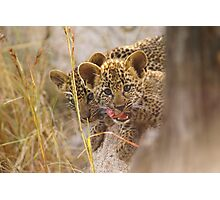 Leopard cubs Photographic Print
