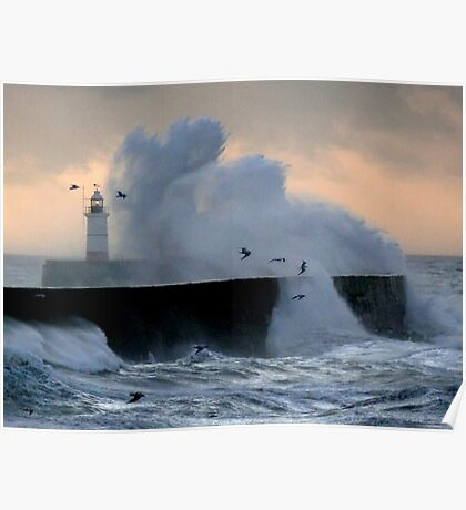 Gulls & Gales Poster