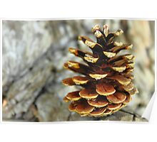 The Lonely Pinecone Poster