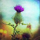 Glencoe Thistle by Lynn Benson