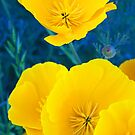 Poppies, My Pretty by ShutterlyPrfct