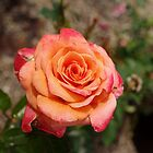 Beautiful Orange Rose by James Formo
