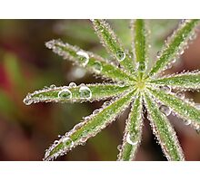 Dewy Morning Photographic Print