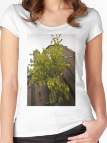 Beautiful Golden Chain Tree in Full Bloom Women's Fitted Scoop T-Shirt