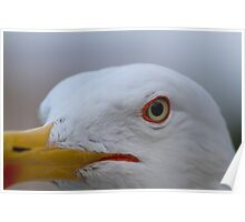 seagull posing for the photographer Poster