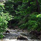 Spencer Gorge/Webster's Falls Conservation Area by jules572